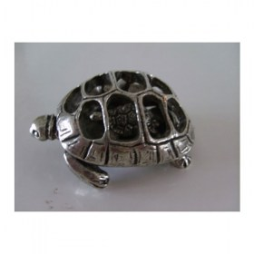 tortue-miniature-animal-laud12007-2