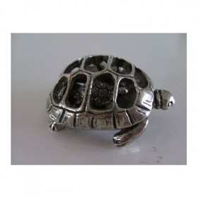 tortue-miniature-animal-laud12007